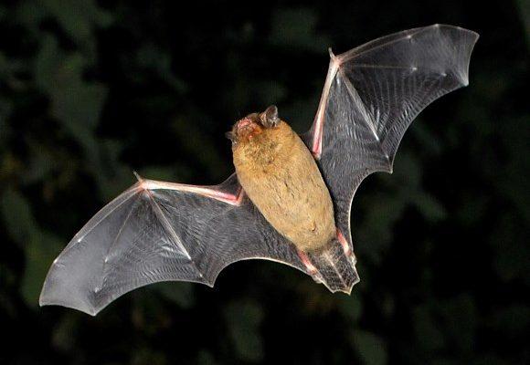 bat habitat box