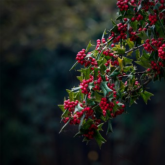 dedicate a tree for christmas